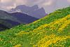 Il giardino della Regina (stefano.chiarato) Tags: pizzopresolana valdiscalve bergamo montagne mountains fiori flowers prati primavera lombardia italy paesaggio panorami landscape pentax pentaxlife pentaxk70 pentaxart