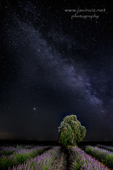 Marte sobre la lavanda (javiruiz) Tags: largaexposicion brihuega nightphotography noche nocturna javierruizherrera javiruiz estrellas samyang12mm xt1 fujifilm seriex lavander guadalajara paisaje naturaleza malva morado vialactea marte