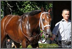 Firenze Fire (Spruceton Spook) Tags: horseracing horses belmontpark dwyer firenzefire