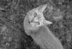 TANTE ELLA TRANSFORMELLA (LitterART) Tags: nikond800 cat katze monochrome nikonfx