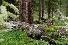 Neuwald (Harald Reichmann) Tags: steiermark neuwald mitterbergwald forst natur baum pilz schwamm lebensraum