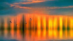 It is not only fine feathers that make fine birds (Wim Koopman) Tags: flowing glowing light fire birds flight flying spoonbill lepelaar sky clouds cloudage goudriaan holland netherlands dutch digital art