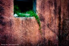 à l'italienne _DSC3263 (Pascal Rey Photographies) Tags: herbes végétal foliage feuilles plante murs murales muros murale peinturesmurales rouge ocre pascalrey nikon d700 luminar2018 photographiecontemporaine photos photographie photography photograffik photographiedigitale photographienumérique photographierurale