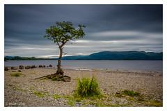 Milarrochy bay, Loch Lomond, Scotland (Stuart Allan38) Tags: lonetree lochlomond scotland water loch milarrochybay longexposure leefilters le bigstopper ndgrads nikon1685 nikond7100 iamnikon summer scottish scenery