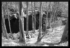 "Daytrip: dark river in ""Black Forest"" (em_ha_er) Tags: river blackandwhite monochrome infrared nature forest"