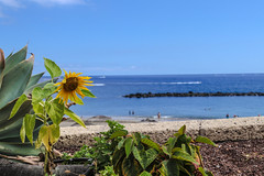 The sun is shining (Paul Wrights Reserved) Tags: landscape lanscapes holiday holidays sun sunshune blue bluesky bluesea sand beach people beaches sunflower floer flowers beautiful stamen