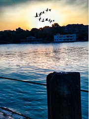 Golden hour (basem_teacher) Tags: moments summer sky nile iphone iphoneshot sea birds beautiful view scenery scene adventure explore photographer photography landscape lightroom egyptian egypt cairo goldenhour sunset