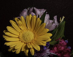 An Array Of Color In A Flower Arrangement (Bill Gracey 20 Million Views) Tags: flowers flores floralphotography macrolens homestudio darkbackground yongnuo yongnuorf603n lastoliteezbox softbox tabletopphotography nature naturalbeauty sidelighting directionallight color colorful colors yellow red pink green