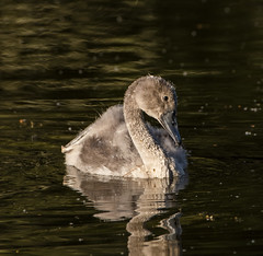 barn 3 (md kingston) Tags: nikon d500 200500 wildlife water birds uk lake
