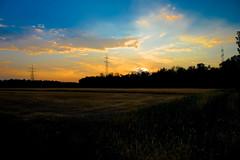 (Knipser85) Tags: sony alpha 6300 1650 getreide feld weizenfeld abend sunset evening