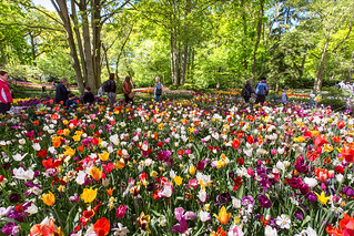 Mixed Tulips _3372