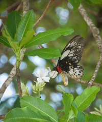 DSC_0042 (yakovina) Tags: silverseaexpeditions indonesia papua new guinea island kai archipelago