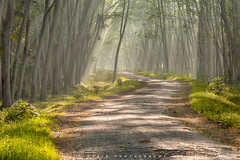 Sometimes you just have to walk your own path (©Helminadia Ranford) Tags: sengon trees jember rays nature road eastjava travel photography
