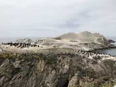 20180618_194532475_iOS (jimward85) Tags: pointlobos carmelbythesea montereybay california