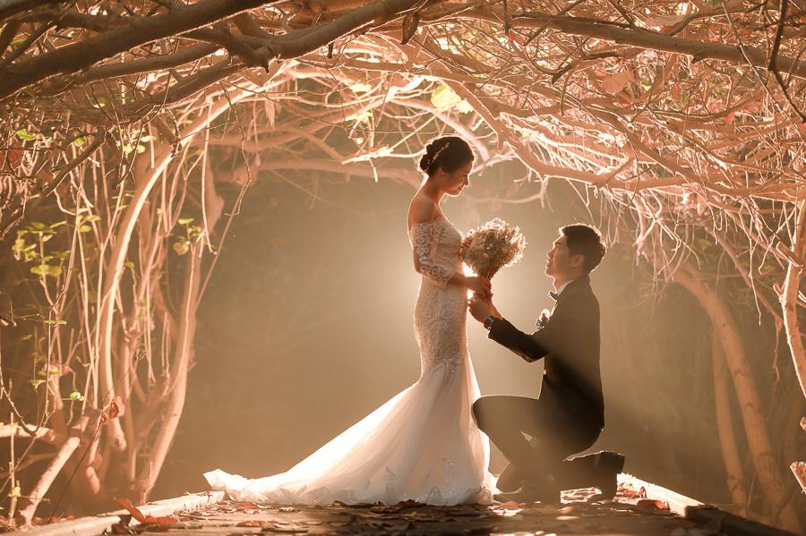 29073363628 dc81f1e7ef o [台南自助婚紗] Albert & Vicky/范特囍手工婚紗
