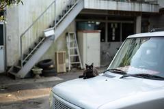 猫 (fumi*23) Tags: ilce7rm3 sony 55mm sel55f18z sonnartfe55mmf18za sonnar cat chat neko katze gato feline animal alley street car zeiss miyazaki 宮崎 ソニー ねこ 猫 bokeh emount