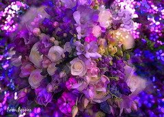 50 Shades Of Purple (brillianthues) Tags: flowers floral purple lavendar roses nature garden colorful collage photography photmanuplation photoshop
