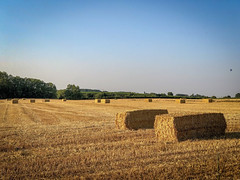Straw bales in the fields (deefken) Tags: farm field tractor farmhouse agriculture wheat mowing plowing farming farmer barn sowing straw bale
