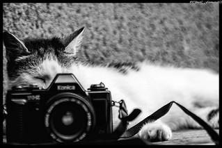 bouge pas  2 pattes, chat prend la photo !