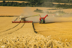 CTF Wheat Harvest 2018 | CLAAS // HORSCH // JOHN DEERE (martin_king.photo) Tags: harvest harvest2018 ernte 2018harvestseason ctfharvest controllentrafficfarming ctf wheat grain combineharvester combine harvester new modernmachine summerwork powerfull martin king photo machines strong agricultural great czechrepublic agriculturalmachinery farm working modernagriculture landwirtschaft martinkingphoto moisson machine machinery field huge big sky agriculture power dynastyphotography lukaskralphotocz day fans work place yellow gold golden eos country lens rural camera outdoors outdoor goldenhour colours landscape fields lines controlledtrafficfarming claas claaslexion horsch horschtitan johndeere johndeere8rt goldenfields