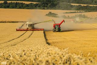 CTF Wheat Harvest 2018 | CLAAS // HORSCH // JOHN DEERE