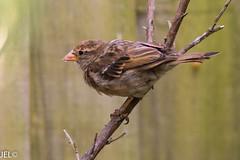 180718_29 (whotneckst) Tags: nikond7200 nikkor300mmafed kenkox14 birds