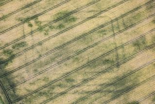 Iron Age Settlement