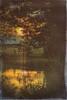 Coucher de soleil sur l'étang (Des.Nam) Tags: soleil étang eau arbres coucherdesoleil nature paysage desnam couleur orange d800 nordpasdecalais nikon 105mmf28 hautsdefrance nord wonderfulworld texture analogeffex