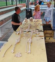 Blacon 090618 - DSC_0770 (Leslie Platt) Tags: exposureadjusted straightened cropped cheshirewestchester cityofchesterband blaconhighschool historyevent skeleton archaeology