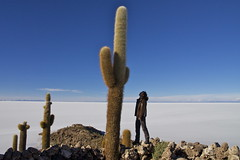 (Jbouc) Tags: southamerica americadelsur amériquedusud bolivie bolivia uyuni salar desert travel landscape cactus isla pescado