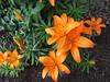 IMG_1158 (cathead77) Tags: mercercounty westvirginia wv princeton chilis