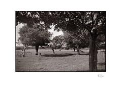 Landscape (radspix) Tags: miom photax blindé arista edu ultra 100 pmk pyro