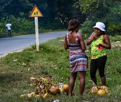 Girl Talk (Rod Waddington) Tags: streetphotography africa african afrique afrika madagascar malagasy women road roadside coconuts group outdoor culture cultural ethnic ethnicity trees grass candid