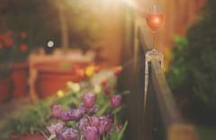 Summer in a Glass... (KissThePixel) Tags: winw nikondf 50mm light reflection rosewine wine glass stilllife tabletop garden summer july beauty shadow sunbeam flower flowers creative fence