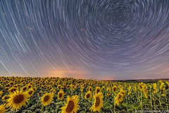 Total movement (Alfredo Madrigal) Tags: girasoles sunflowers astrofoto astrophotography astronomy nightscape night stars estrellas trails startrails polaris nikon moonlight luzdeluna