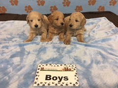 Roxie Boys pic 4 6-17