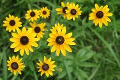 Pollinator (bamboosage) Tags: meyeroptik primoplan 1850 m42 germany