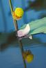 _MG_6496.0810.Gia Vân.Gia Viễn.Ninh BÌnh (hoanglongphoto) Tags: asia asian vietnam northvietnam flower lotus nature natureinvietnam canon ninhbình giaviễn giavân thiênnhiên hoa hoasen hoasenhồng pinklotus canonef100400mmf4556lisusm blossom lotusblossom cậncảnh close closeup reflection water soibóng phảnchiếu nước mặtnước canoneos5dmarkii