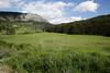 Provence (ryorii) Tags: provence france nature verdon parcduverdon gorgesduverdon gole forest canyon grass trees flowers