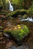 Xorroxin (Fotografias Unai Larraya) Tags: cascadas agua río largaexposición paisajes ngc otoño colores musgo roca navarra arboles hojas