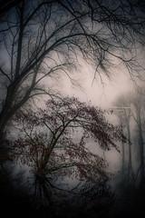 The day after (Ingeborg Ruyken) Tags: dropbox winter empelfilmpjewinter2018 dawn flickr ochtend instagram grootewiel march 500pxs morning fog natuurfotografie mist empel maart bomen