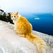 Firostefani et son chat   Firostefano and its cat