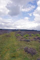 32365 (benbobjr) Tags: england english uk unitedkingdom gb greatbritain britain british northyorkshire yorkshire ryedale northridingofyorkshire northyorkmoors nationalpark moor moors