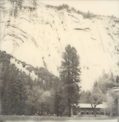 ahwanhee (lawatt) Tags: ahwanhee hotel tree granite cliff washingtonsarches silver yosemite film polaroid 600 bw slr680