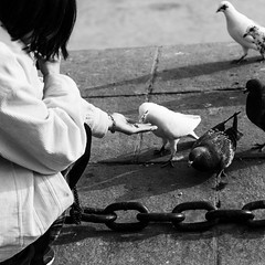 Lunch or dinner? (Go-tea 郭天) Tags: dalian dongbei liaoning xinghai square sea shore side water chain birds food corn eat eating woman lady feed feeding animal platform sun sunny shadow canon eos 100d 50mm prime street urban city outside outdoor people candid bw bnw black white blackwhite blackandwhite monochrome naturallight natural light asia asian china chinese