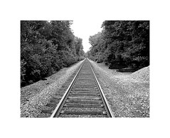 The Endless Track (BlueisCoool) Tags: flickr foto photo image capture picture photography canon powershot outdoors nature trees sky bw plimptonville massachusetts blackandwhite railroadtracks traintrack plimptonstreet thepinnacle pinnacletrail walpolemassachusetts newengland