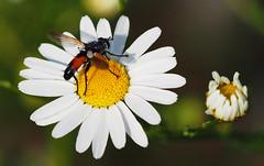 Wien Kurpark Oberlaa (arjuna_zbycho) Tags: kurparkoberlaa parkanlage 10bezirk wienergemeindebezirk gemeindebezirk favoriten kwiaty blumen flowers