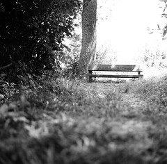62910002 (Martin Klöckner) Tags: seagull4b ilforddeltafp4 ilfordddx41 12min bench bank greifesee natur peace friedlich entspannung relax
