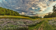 8R9A2110-16Ptzl1sTBbLGER (ultravivid imaging) Tags: ultravividimaging ultra vivid imaging ultravivid colorful canon5dm3 canon clouds sunsetclouds stormclouds scenic sky fields flowers farm path pennsylvania pa panoramic painterly landscape lateafternoon twilight rural trees road vista