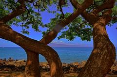 Twisted (Kirt Edblom) Tags: maui hawaii mauihawaii mauihi tree trees lahania lahainahi water wife pacific pacificocean lanai island beach blue bluesky gaylene milf kirt kirtedblom edblom easyhdr hdr nikon nikond7100 nikkor18140mmf3556 park waterscape wayside scenic serene seascape 2018 sky landscape